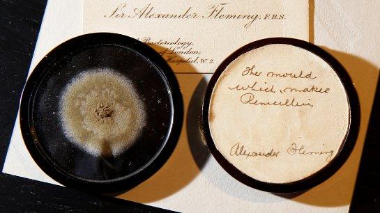 На аукционе за 15 тысяч долларов был продан 90-летний образец плесени