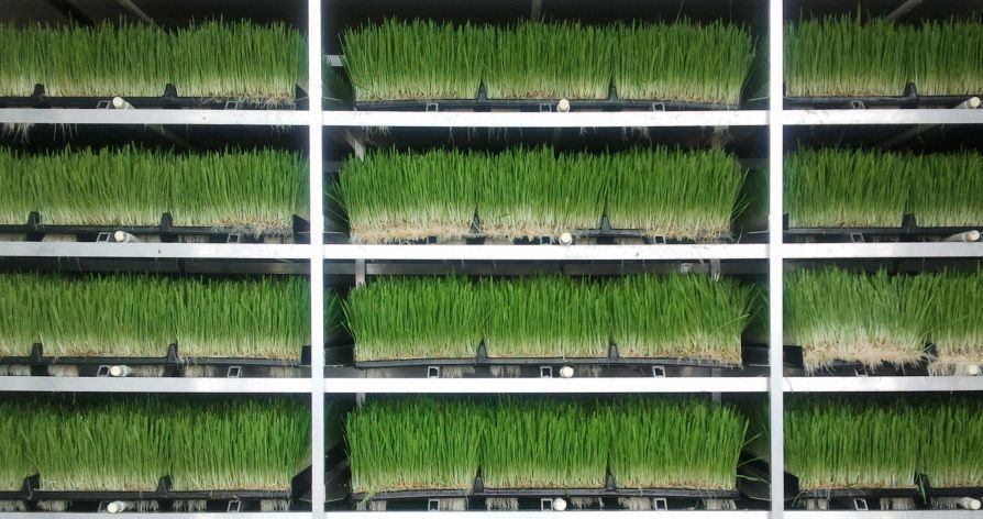 Роботизированная вертикальная ферма выращивает растения на 400% эффективнее обычной фермы - 1