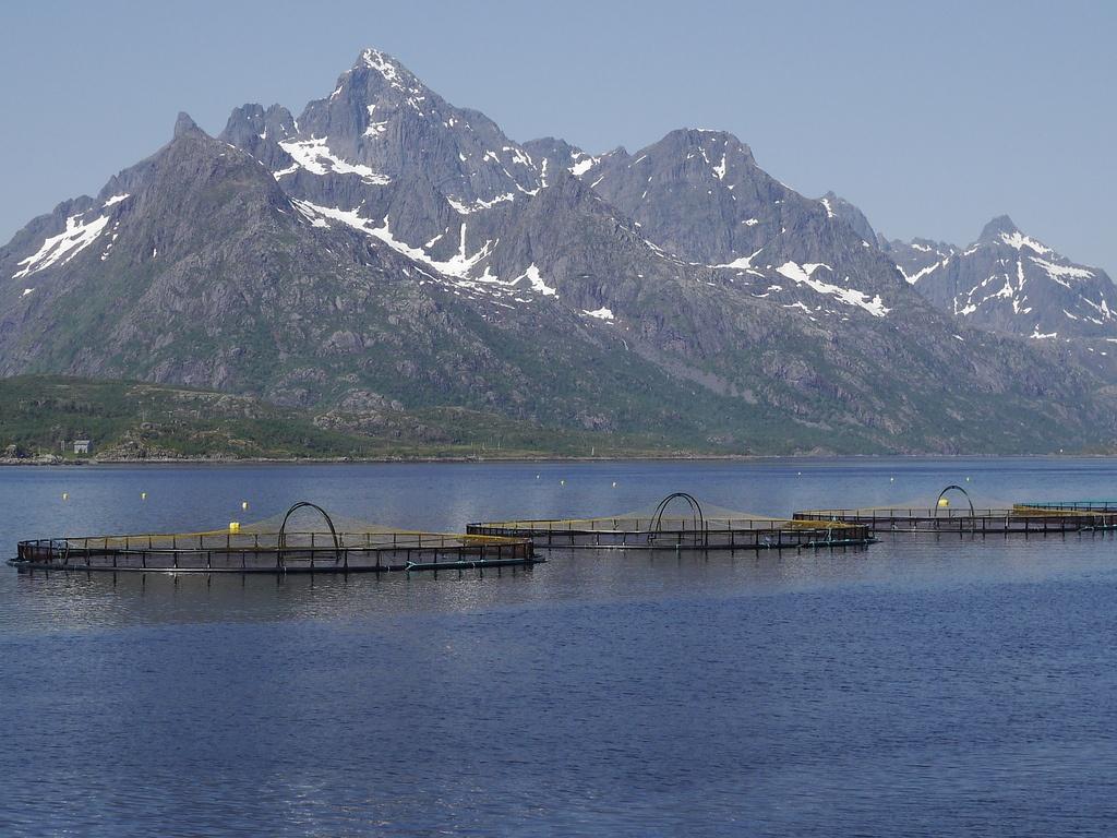 В Норвегии с паразитами рыб борются при помощи подводных роботов с лазерами - 1