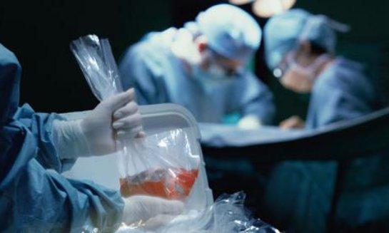В Британии проведут первую пересадку свиных органов младенцам
