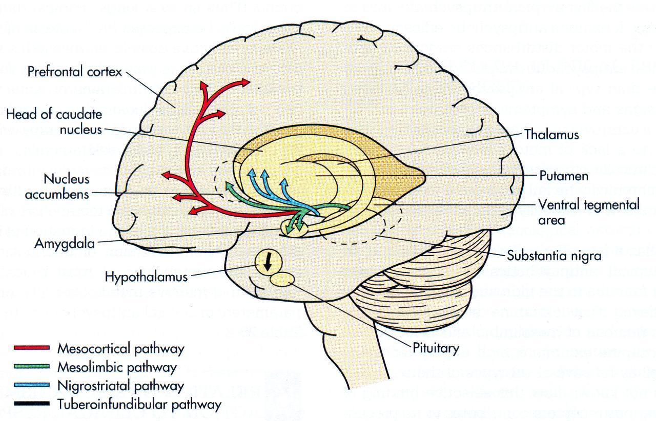 Как лечат сумасшедших. 1.1 — Фармакотерапия: основы и шизофрения - 10