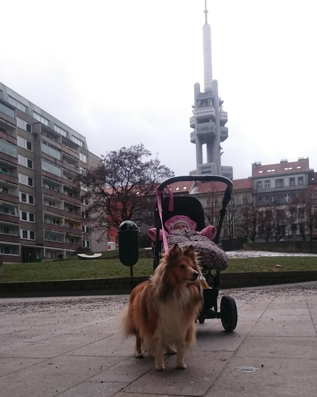 Питерский бездомный — в Праге. Продолжение истории разработчика-самоучки - 4