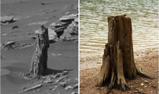 На Марсе когда-то росли деревья