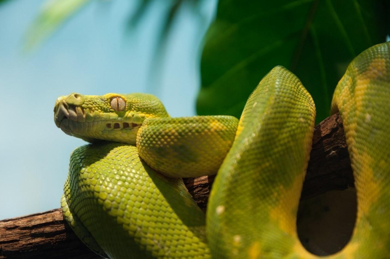 «SQL Server 2017»: Теперь с поддержкой Python - 1