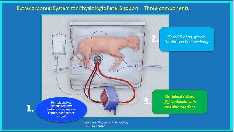 Ученые смогли продолжить развитие недоношенных ягнят в искусственной матке - 2