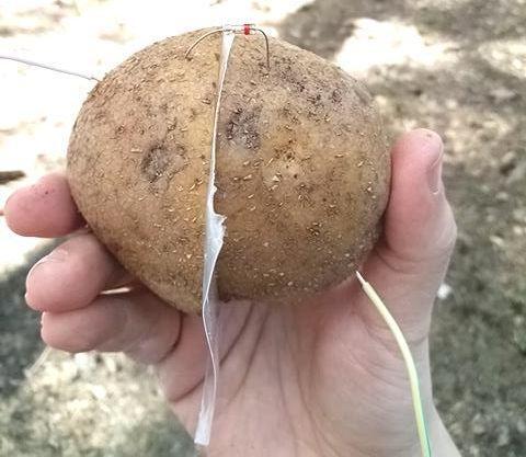 Радиоприемник из … картошки - 1