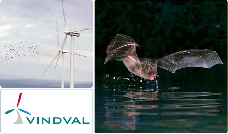 Ветряные электростанции являются основной причиной гибели летучих мышей на нашей планете