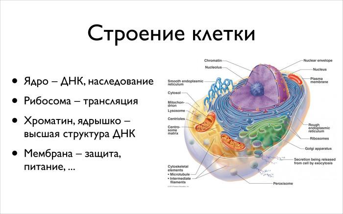 Алгоритмические задачи в биоинформатике. Лекция в Яндексе - 2
