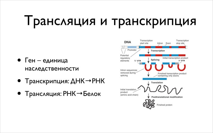Алгоритмические задачи в биоинформатике. Лекция в Яндексе - 5