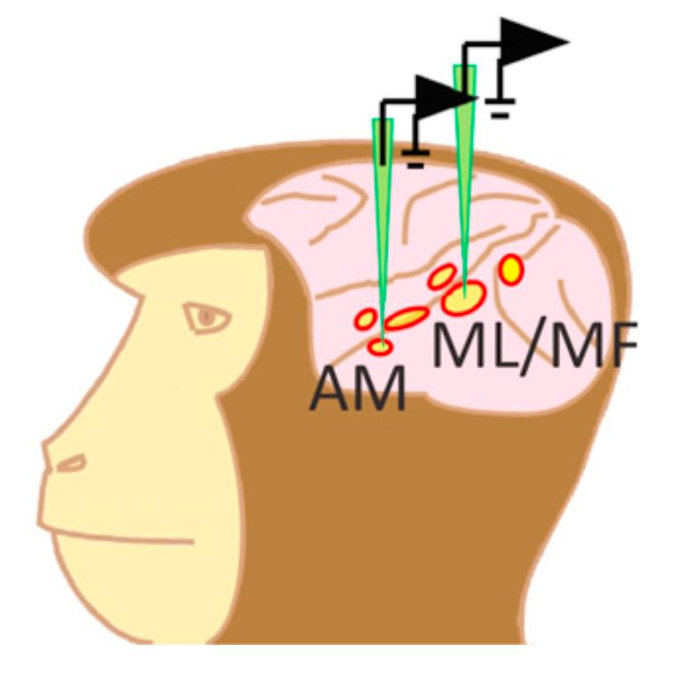 Удивительно простое кодирование лиц в мозге производят всего 205 нейронов - 3