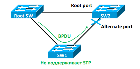 Rapid STP - 5