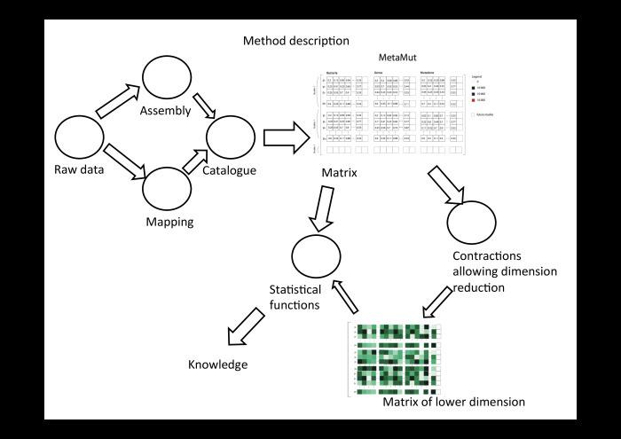 Технологии больших данных в работе с бактериями микробиоты. Лекция в Яндексе - 20