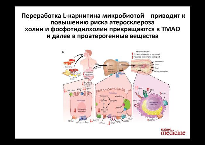 Технологии больших данных в работе с бактериями микробиоты. Лекция в Яндексе - 5