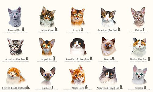 Умеют ли коты строить регрессию? - 1