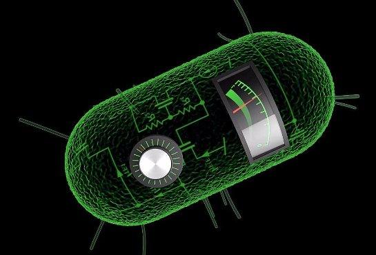 Создан принтер для печати синтетических форм жизни