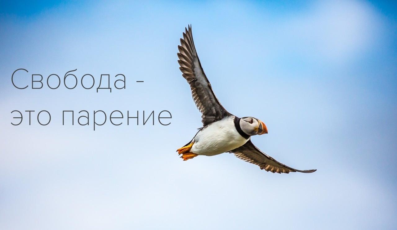 Законы и проекты, которые изменят лицо российского IT. Часть II - 1