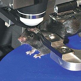 Разработчики ИИ вдохновляются мозгом крыс - 3
