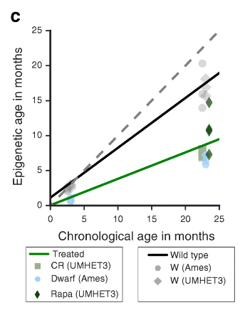 Эпигенетические часы и другие биомаркеры старения - 10