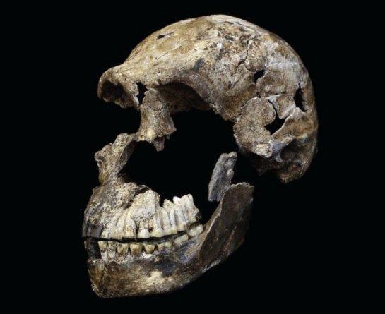 Из-за «Homo naledi» возникло много вопросов об эволюции