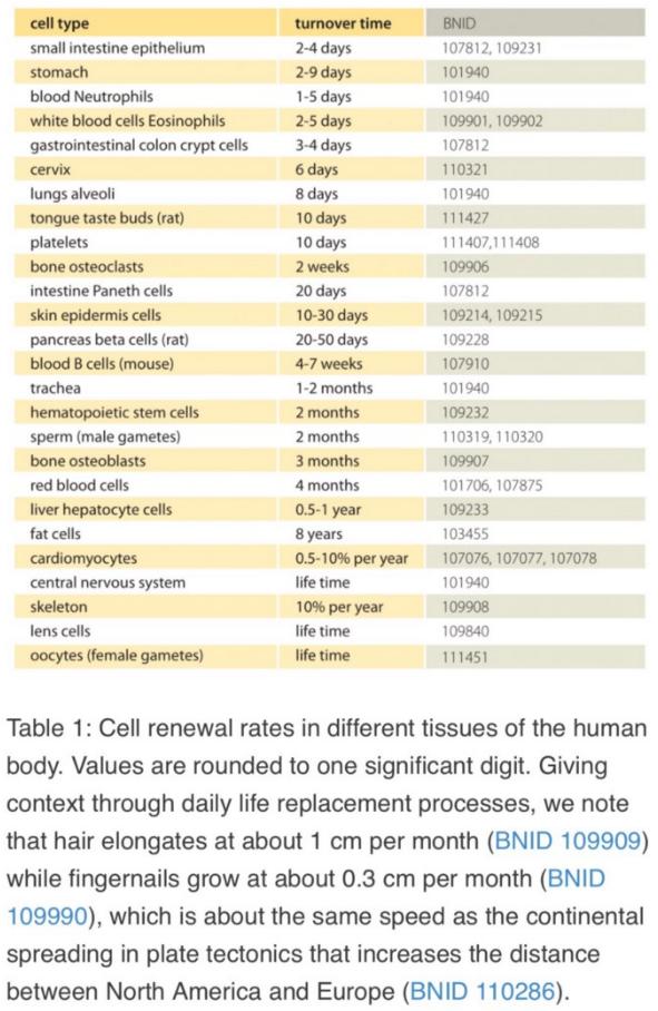 Сенесцентные клетки-зомби — ложный след в борьбе со старением? - 19
