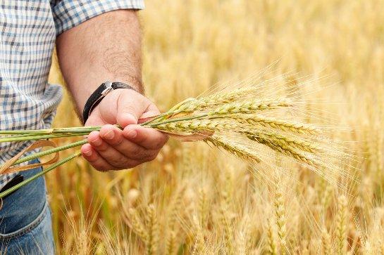 Ученые научились просчитывать объемы получения будущего урожая