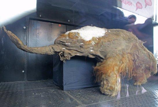 Проект воскрешения мамонтов получил финансирование