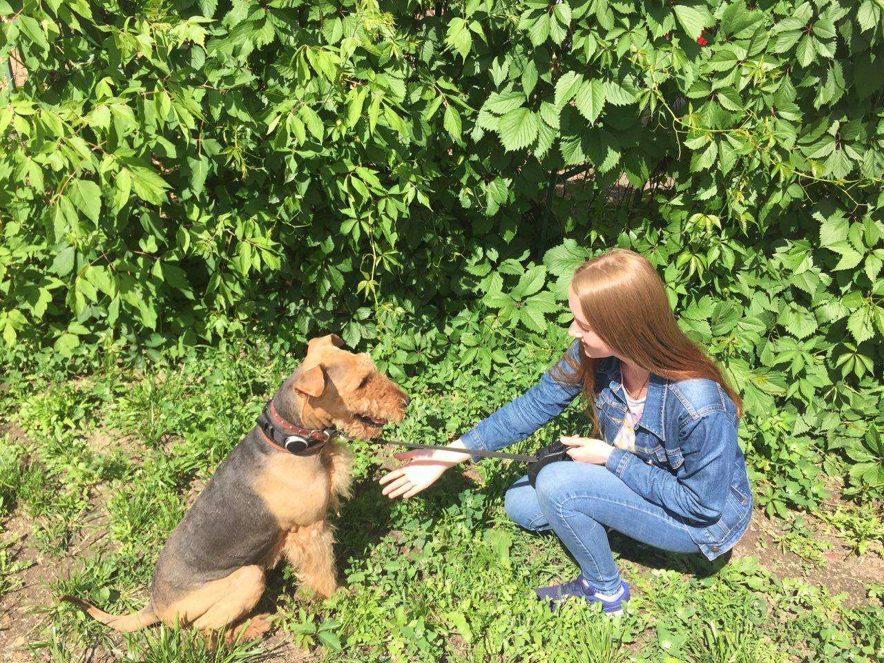 Как работает сервис по выгулу собак «Собака-гуляка» - 2