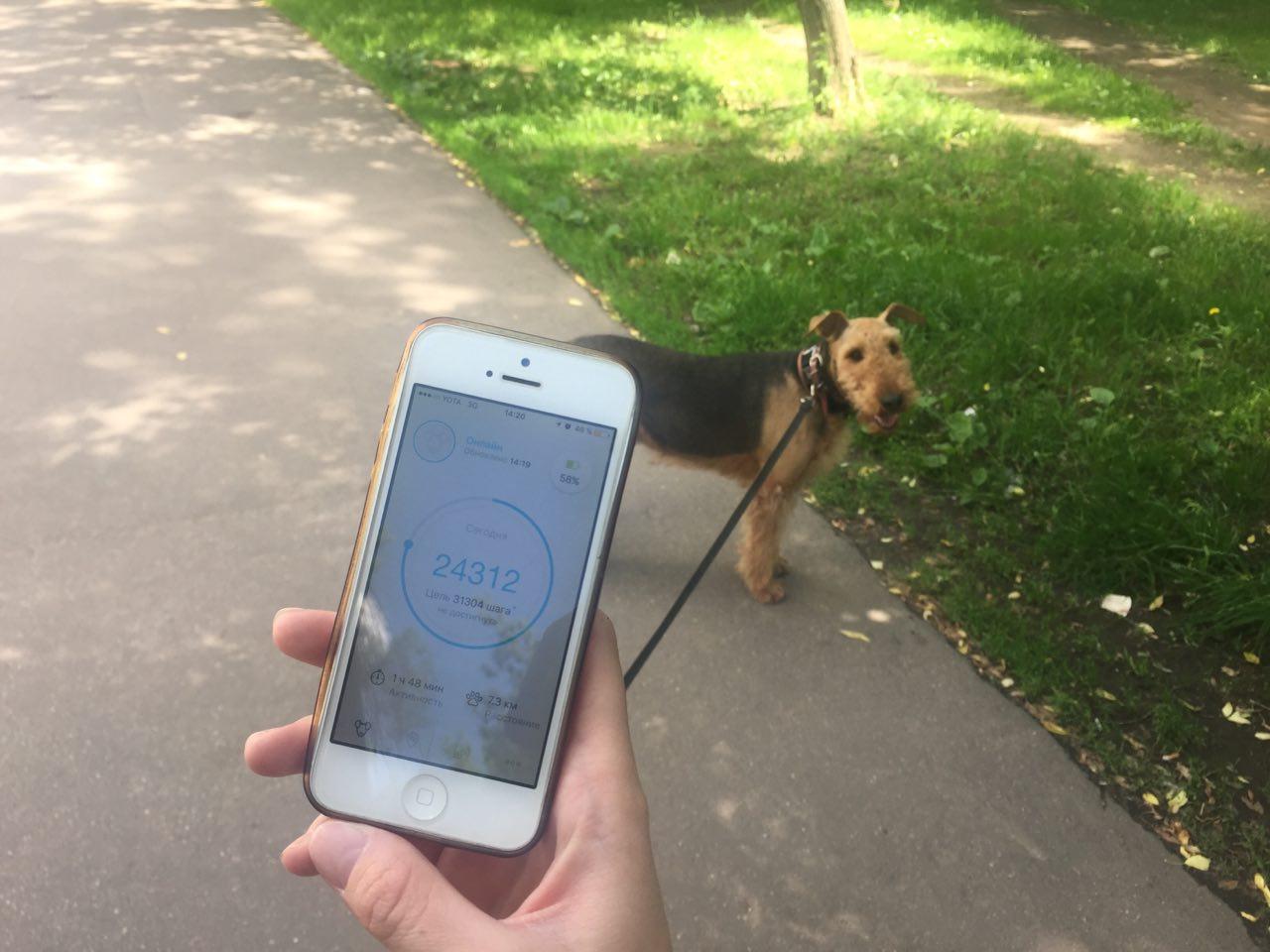 Как работает сервис по выгулу собак «Собака-гуляка» - 4