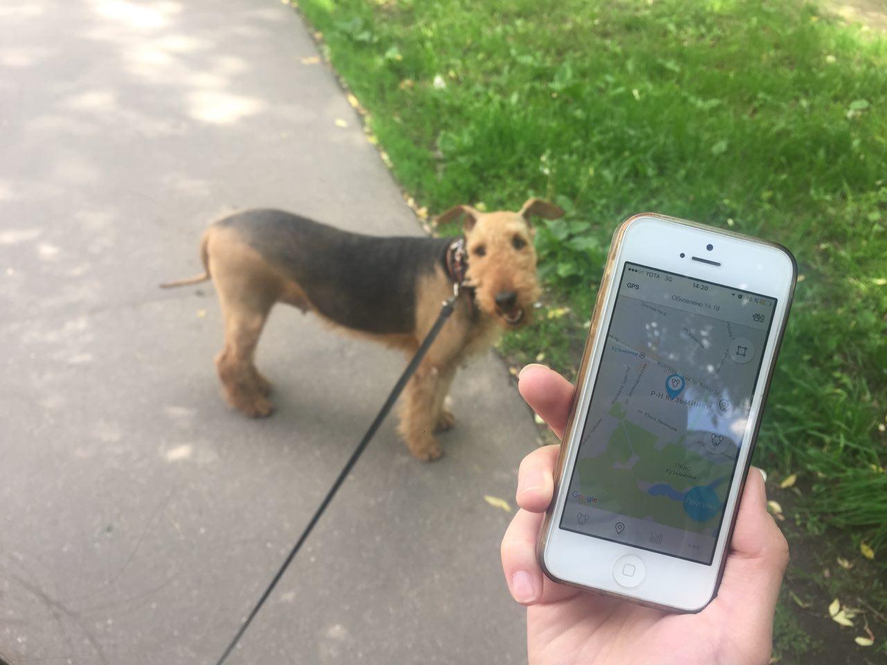 Как работает сервис по выгулу собак «Собака-гуляка» - 5