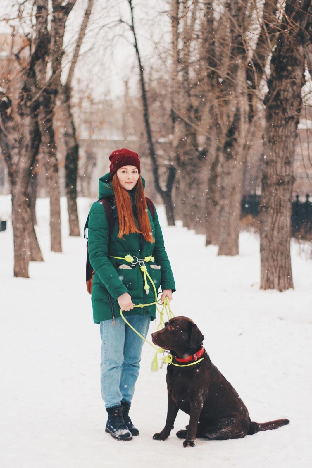 Как работает сервис по выгулу собак «Собака-гуляка» - 6