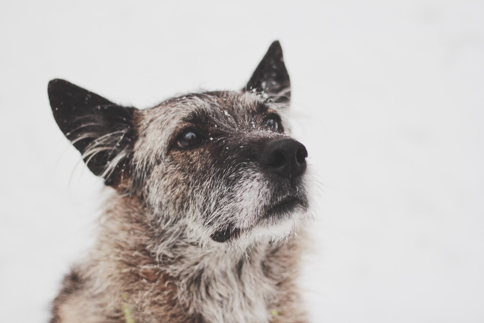 Как работает сервис по выгулу собак «Собака-гуляка» - 8