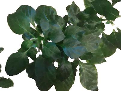 Цветовая сегментация для чайников - 4
