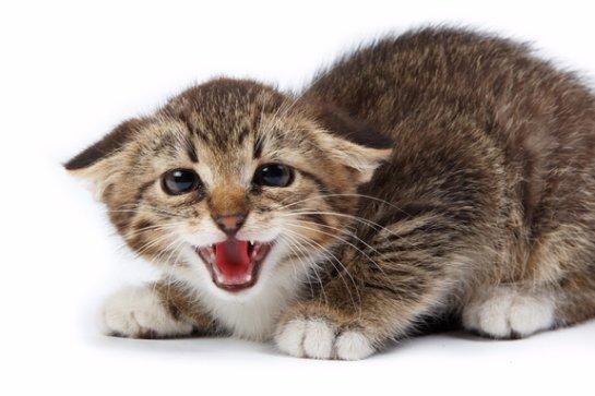 Исследователи: кошачий кал может содержать опасных для человека паразитов