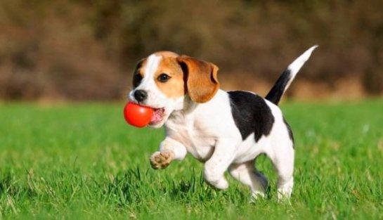 В Китае клонировали собаку