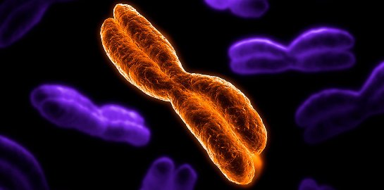 Ученые придумали, как защитить клетки от старения и рака