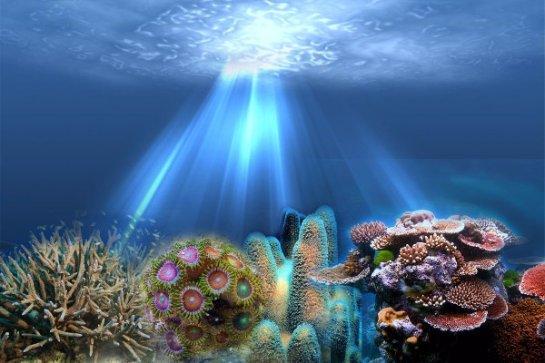 Ученые рассказали, почему глубоководные кораллы светятся в темноте