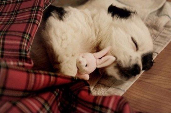 Ученые рассказали, какая продолжительность сна является оптимальной для собак