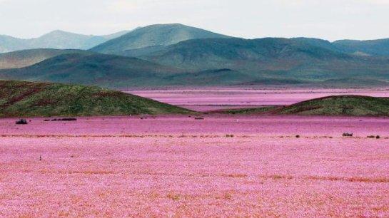 Ученые считают, что в Сахаре следует ожидать лесов и садов