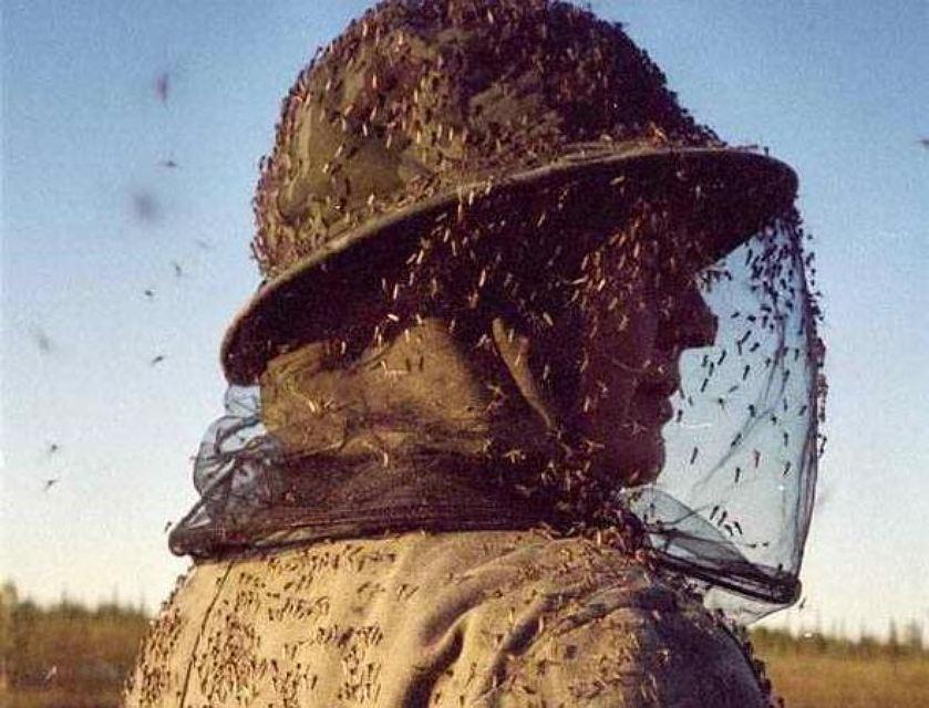 Как я боролся с комарами. Личный опыт и тесты на себе - 2