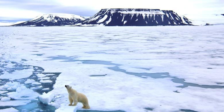 Во льдах Плавучего Континента: история исследования Арктики - 1