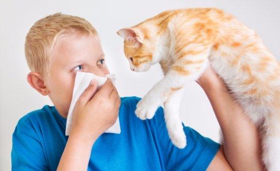 Ученые рассказали, какие мифы сопровождают аллергию на кошек