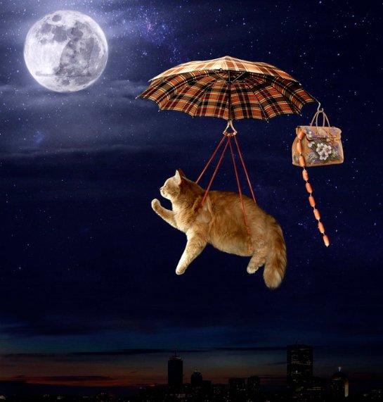 Ученые разгадали, почему кошки всегда падают на четыре лапы