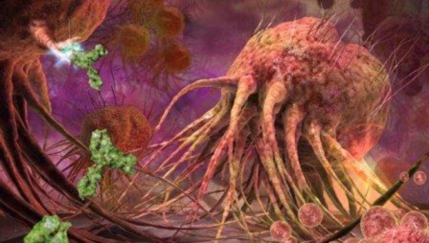 Прорыв в медицине: необычное антитело уничтожает рак