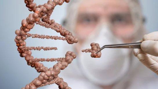 С помощью обработанного CRISPR кожнного трансплантата можно будет лечить людей