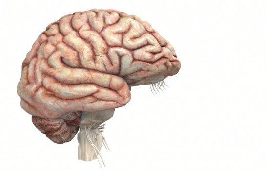 Мозг задействован больше, чем считалось ранее