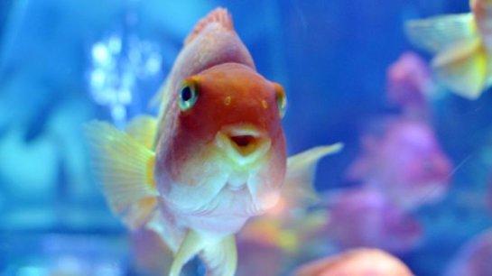 Ученые: Рыбы, чтобы выжить зимой, превращают молочную кислоту в своих телах в алкоголь