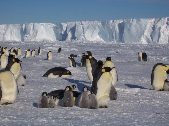 Глобально потепление спровоцировало появление новых видов антарктических комаров