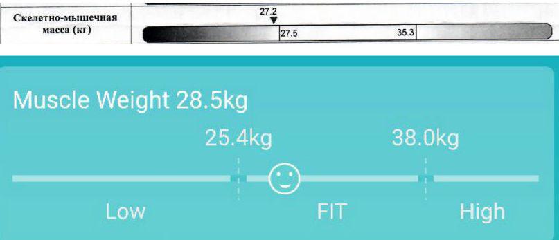 Весы-анализатор MGB Body fat scale — сравнительный «клинический» тест в ЦКБ РЖД - 5