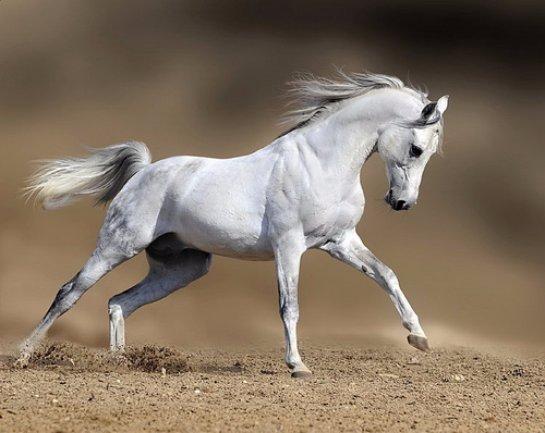 Ученые рассказали, когда лошади лишились своих пальцев